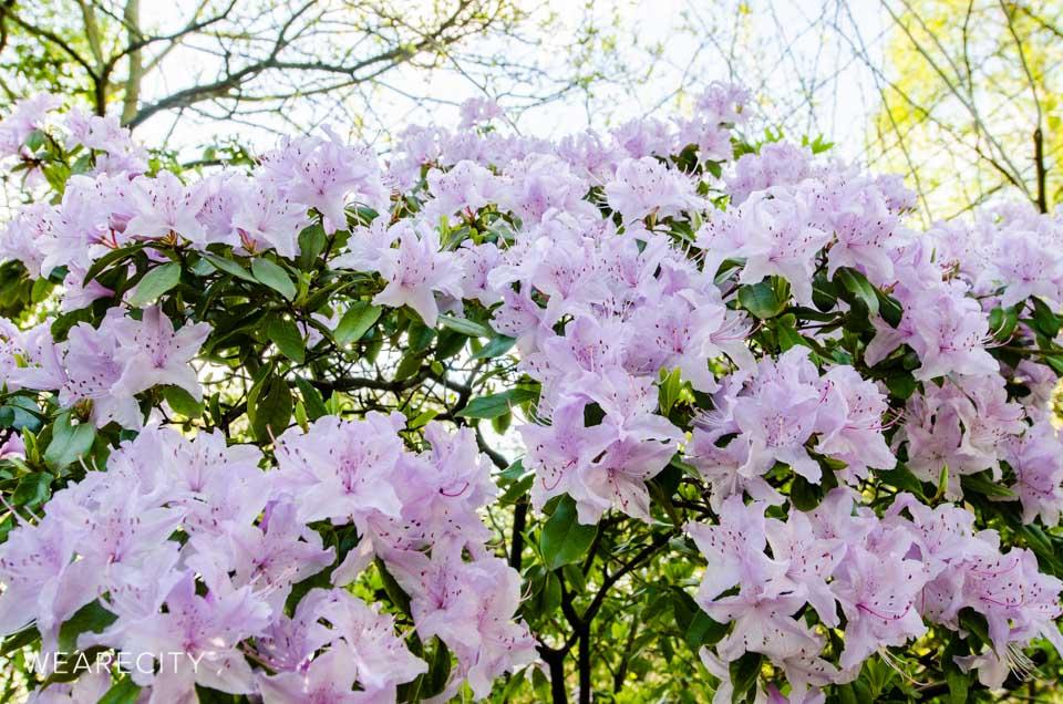 flora_botanischer_garten_eroeffnung_wearecity_koeln-20.jpg