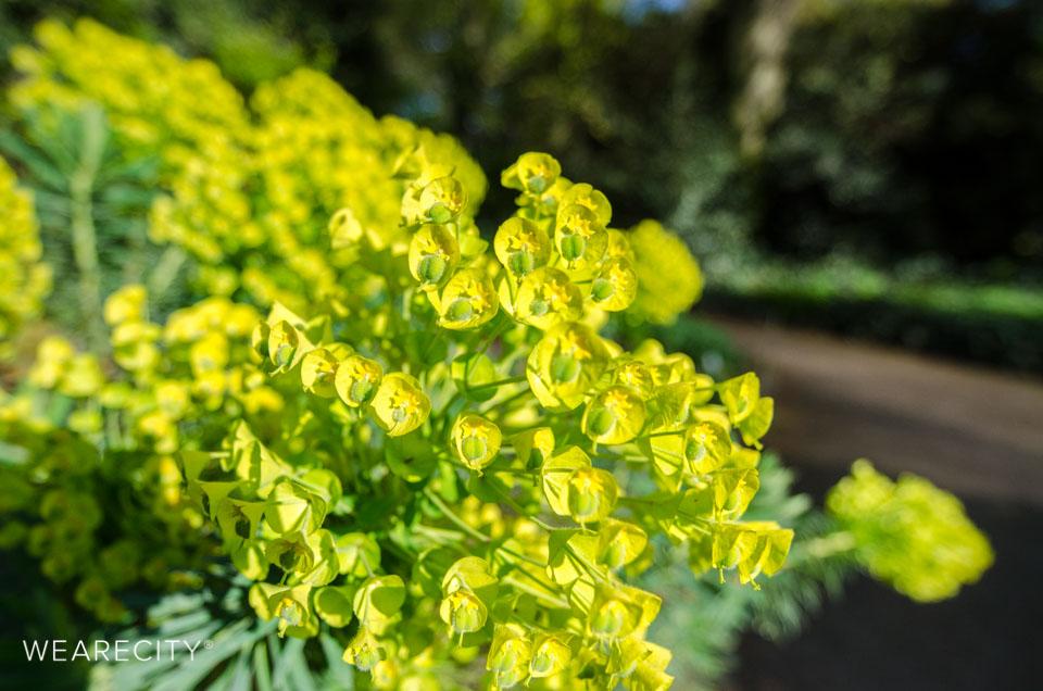 flora_botanischer_garten_eroeffnung_wearecity_koeln-21.jpg