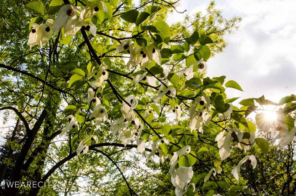 flora_botanischer_garten_eroeffnung_wearecity_koeln-23.jpg
