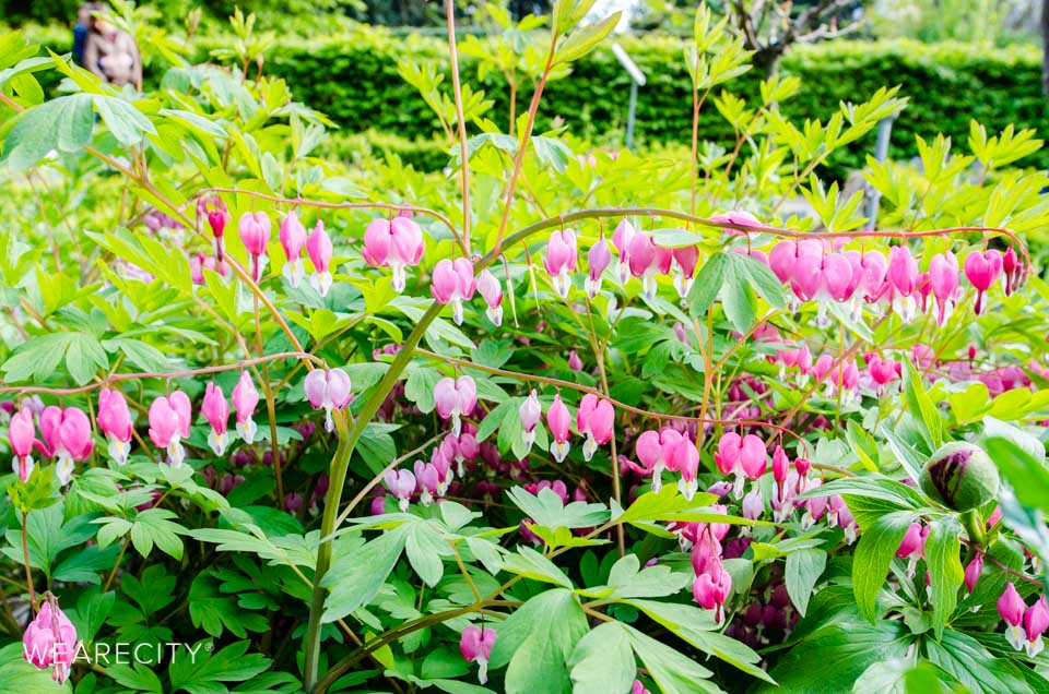 flora_botanischer_garten_eroeffnung_wearecity_koeln-24.jpg