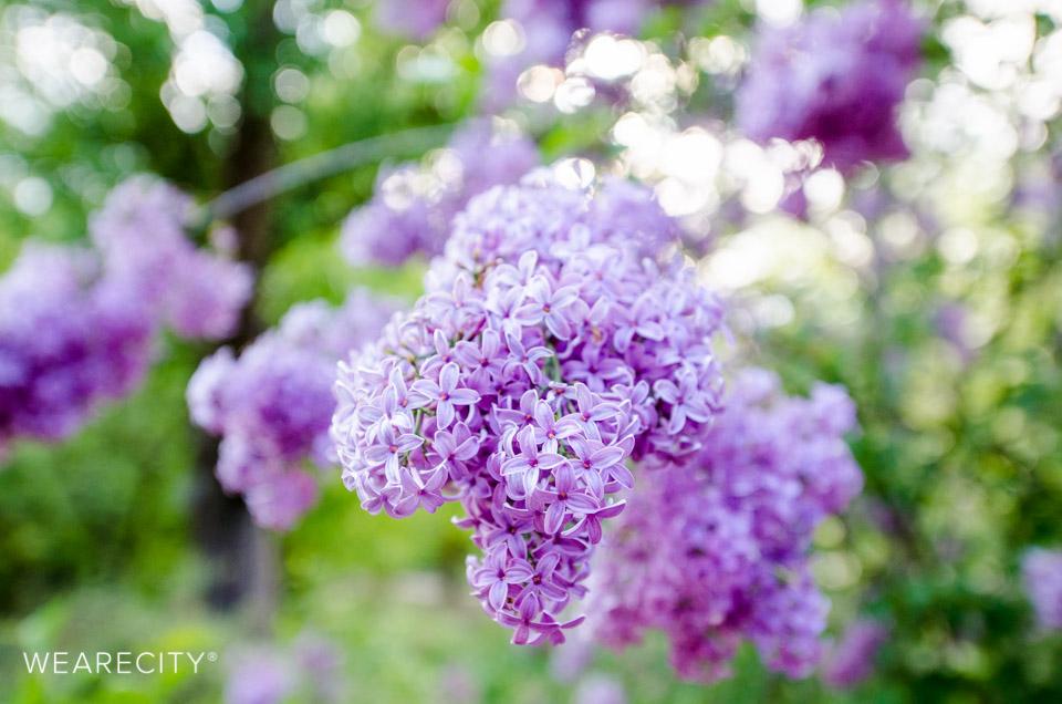 flora_botanischer_garten_eroeffnung_wearecity_koeln-25.jpg