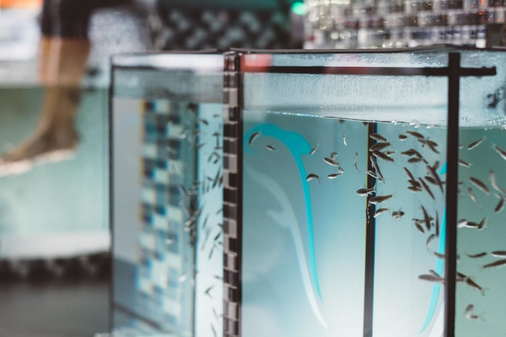 nemo-fishspa-koeln-wearecity-atheneadiapoulis-8.jpg