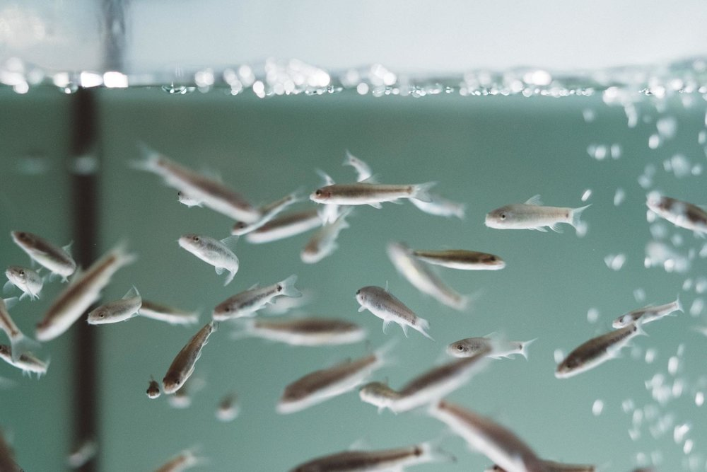nemo-fishspa-koeln-wearecity-atheneadiapoulis-18.jpg
