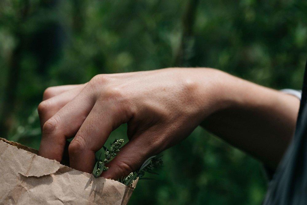 wildesgruen-wildkraeuter-wearecity-wanderung-koeln-atheneadiapoulis-2017-69.jpg