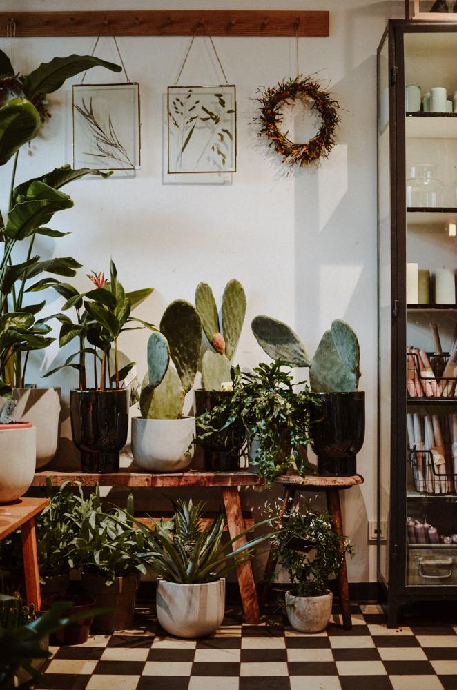 goldregen-floristen-blumen-koeln-Josephine Bruecher-6.jpg