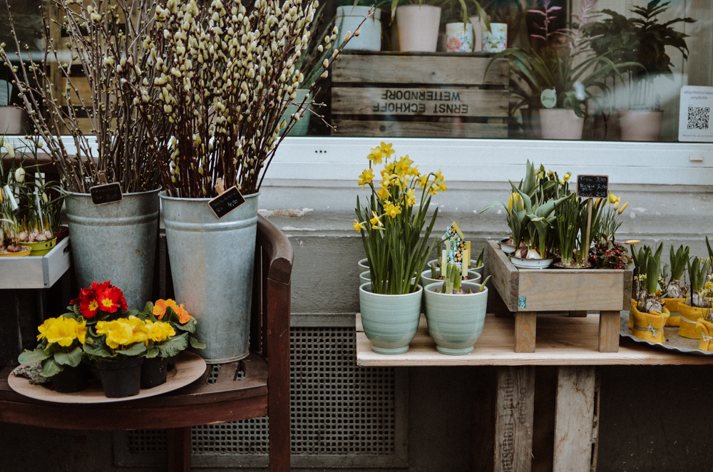 Stielecht-floristen-blumen-koeln-Josephine Bruecher-8.jpg