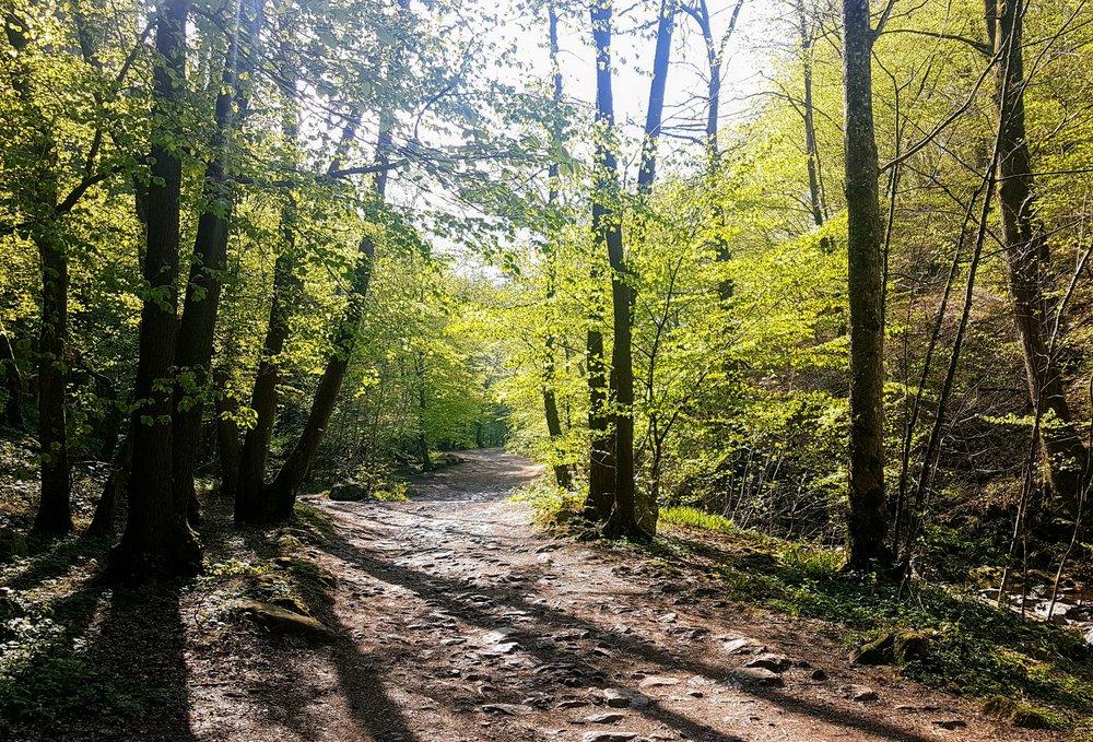 Peaceful woodland trails.