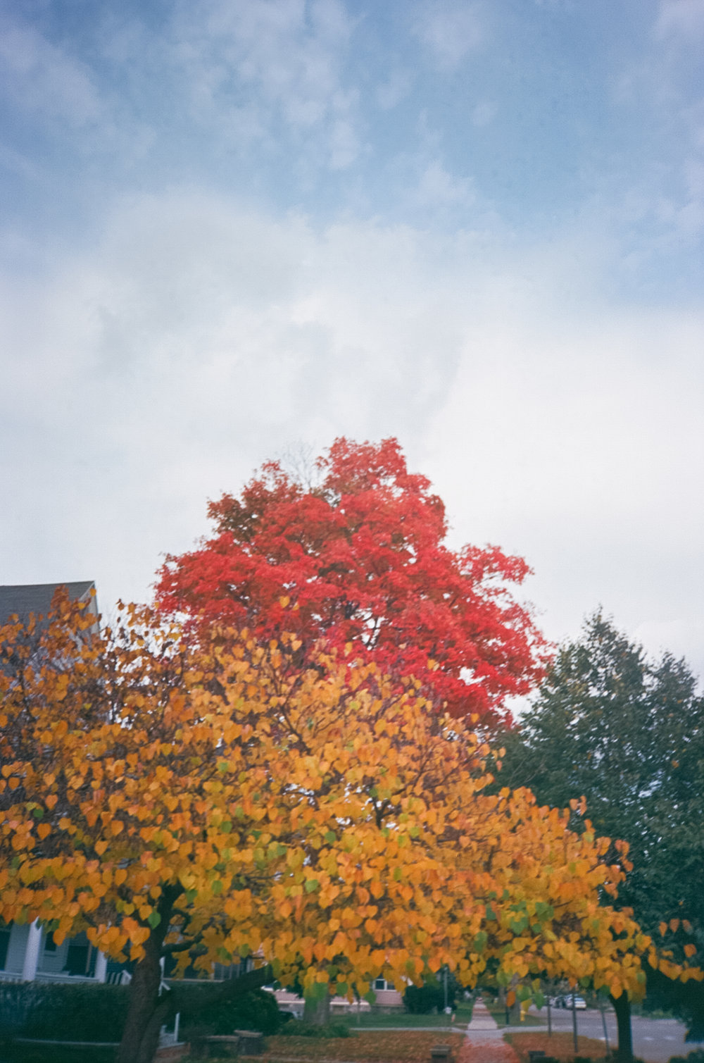 Grand Rapids Michigan Midwest Fall Film Wedding Elopement Photographer