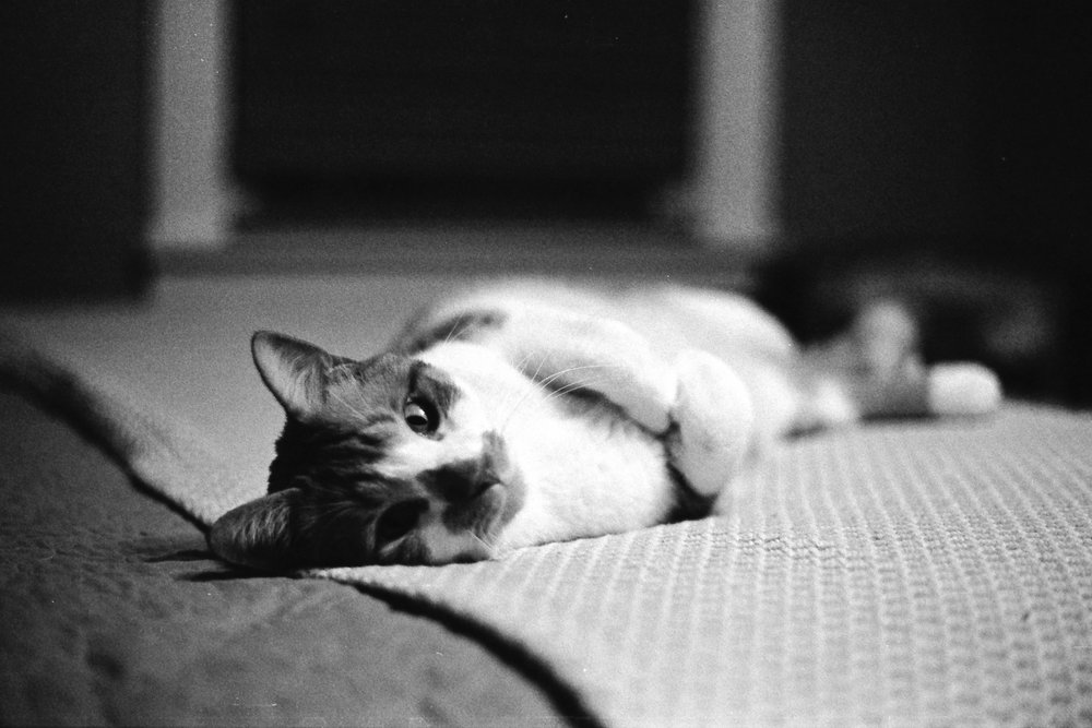 Timeless Black and White Film Photographs Taken in Grand Rapids, Michigan