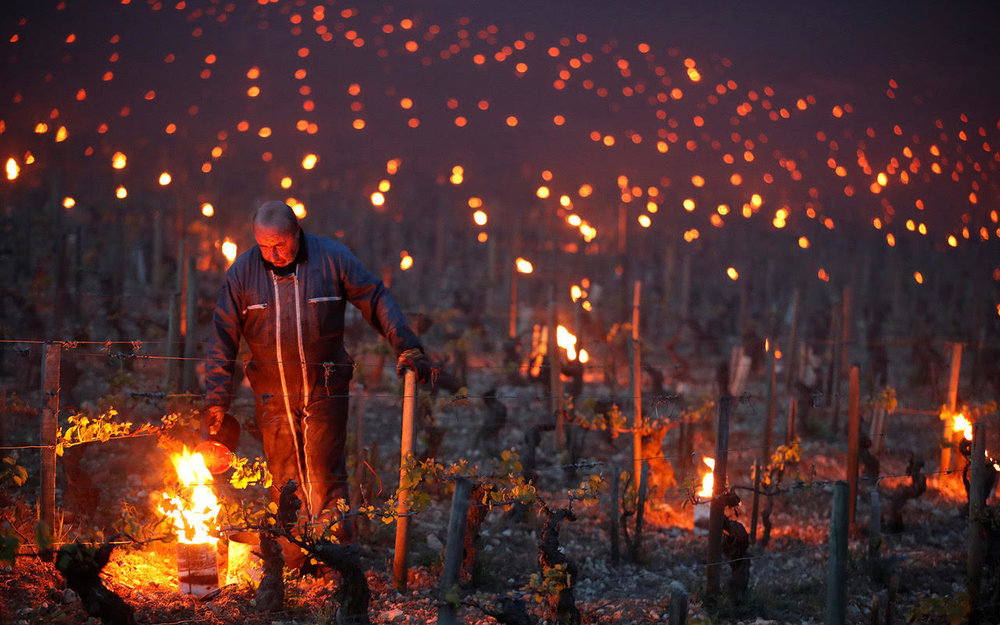 Chablis and other cool climate wines are on fire