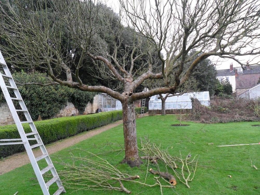 pruning 6.JPG