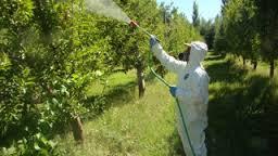 spray 3.jpg
