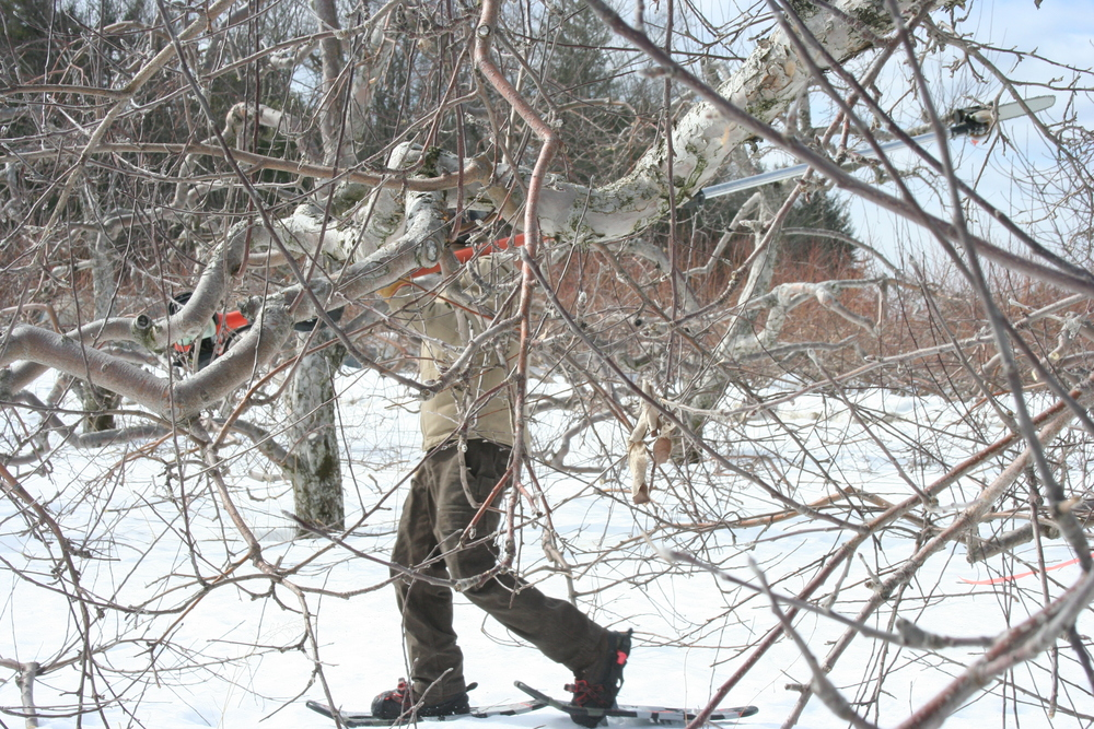 winter pruning.JPG