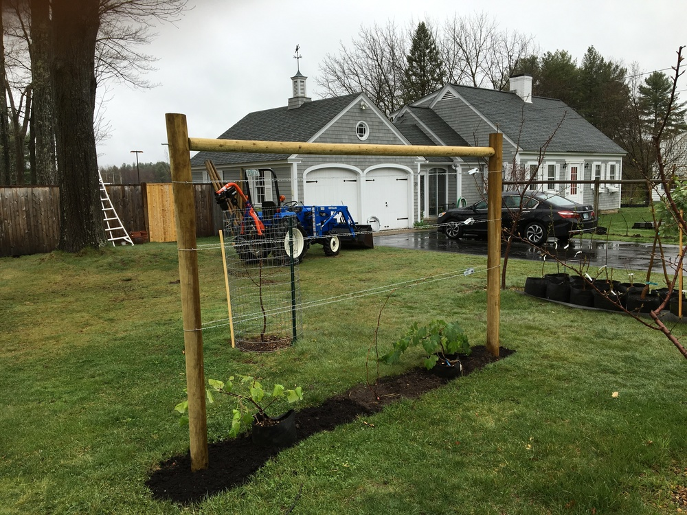 KSV Vintner Kit                                                     Have KSV install it for you or Install yourself - Your very own grape trellis and vines.  All you need is a space 12 feet long and three feet across.