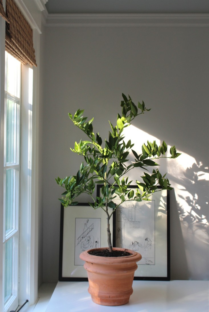 citrus tree thursday 2.jpg