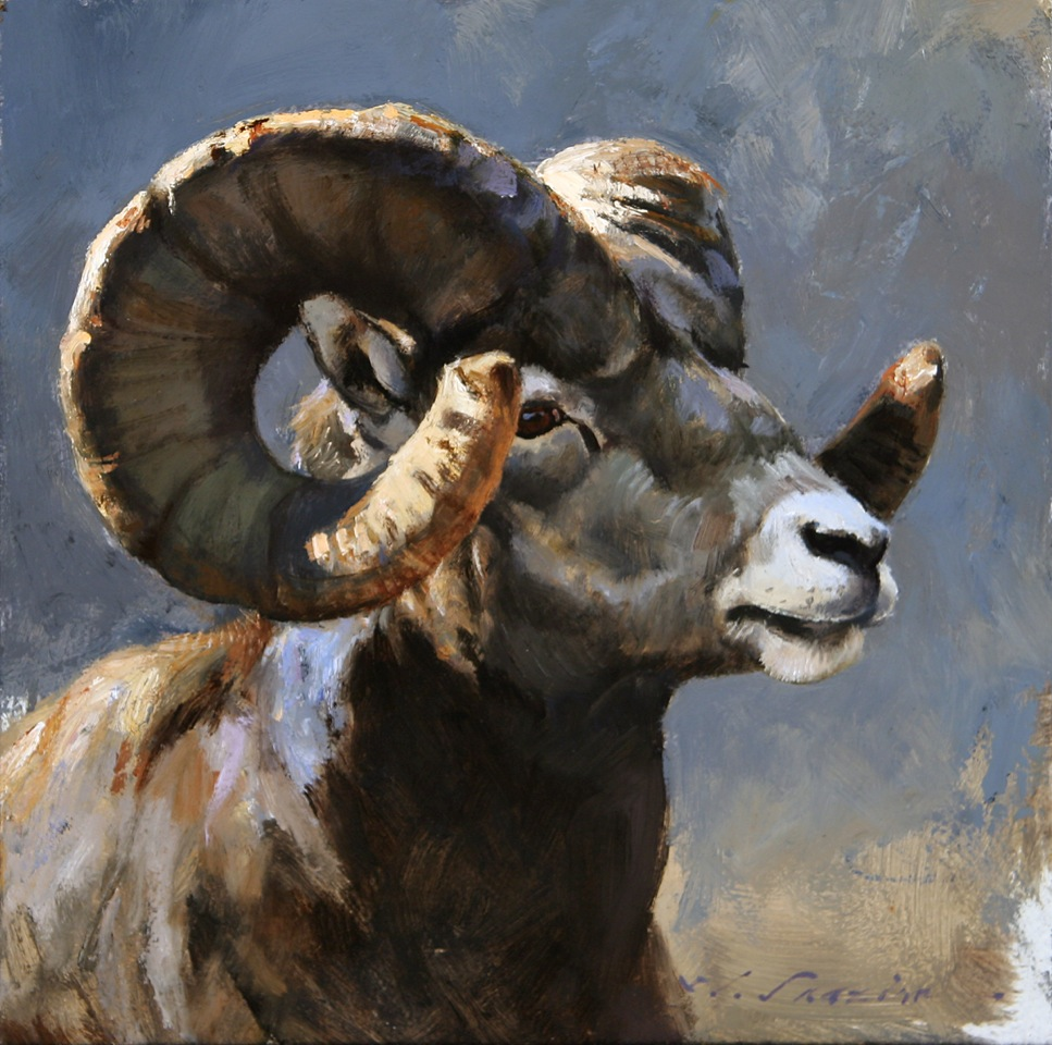 """Rocky Mountain Bighorn""  12 x 12  Oil"