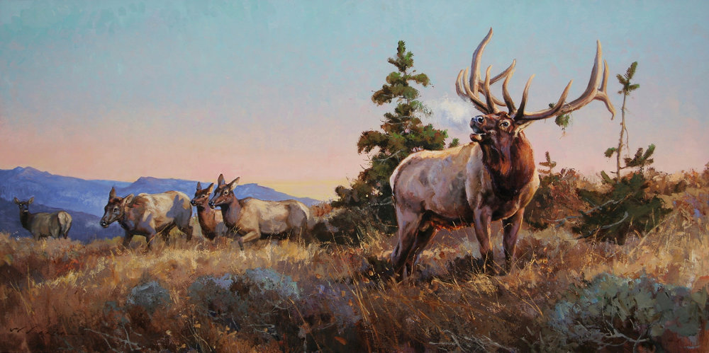 """Canyon Echoes"" 24 x 48 Oil  A mature bull elk during the fall rut is an awesome creature to behold - his bugle is a guttural screaming crescendo, letting all rivals know of his presence. Whether this bugle is meant for the female cow elk as a ""here I am baby, or a call to battle warning"" is anybody's guess. All I know is that I love to hear it! His scream will carry for miles, echoing from the mountaintop and down through the canyons and timbers. It is incredible to hear and sends chills down my spine."