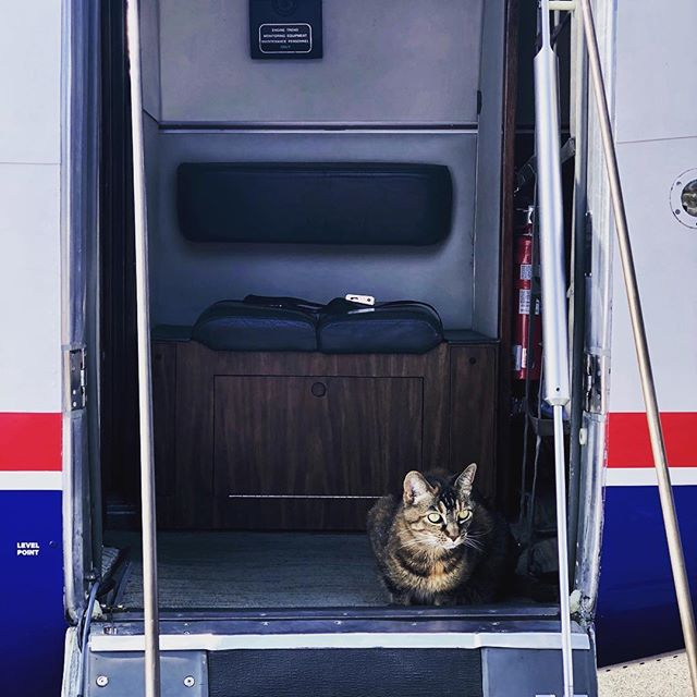 The welcoming committee... Apparently Windsock had a few things to discuss with the Governor today 😹 ✈️ #kingair #kingairnation #cat #cats #catsofinstagram #crazycat #aviationlovers #aviation #avgeek #catwantstofly #fly #flying #welcomingcommittee #catsgotanopiniontoo #politics #governorsplane #idaho #idahome