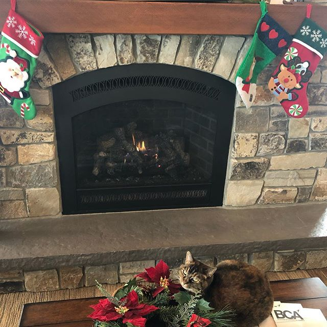 The purrrfect spot 🔥❤️ #cat #catsofinstagram #fbocat #windsock #graniteaviation #christmas #fireplace