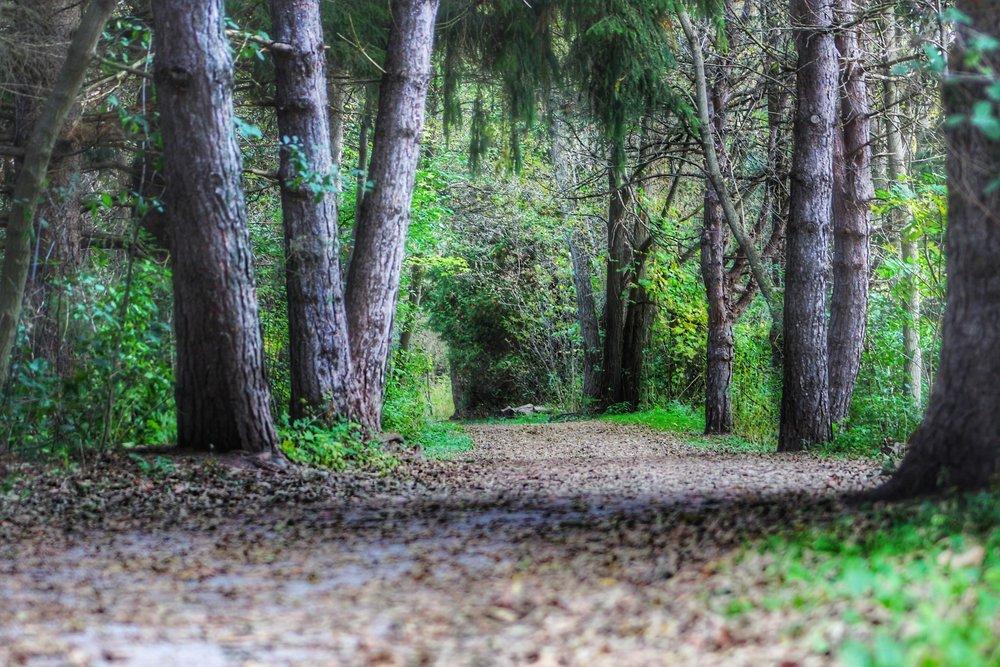 trailinwoods.jpg