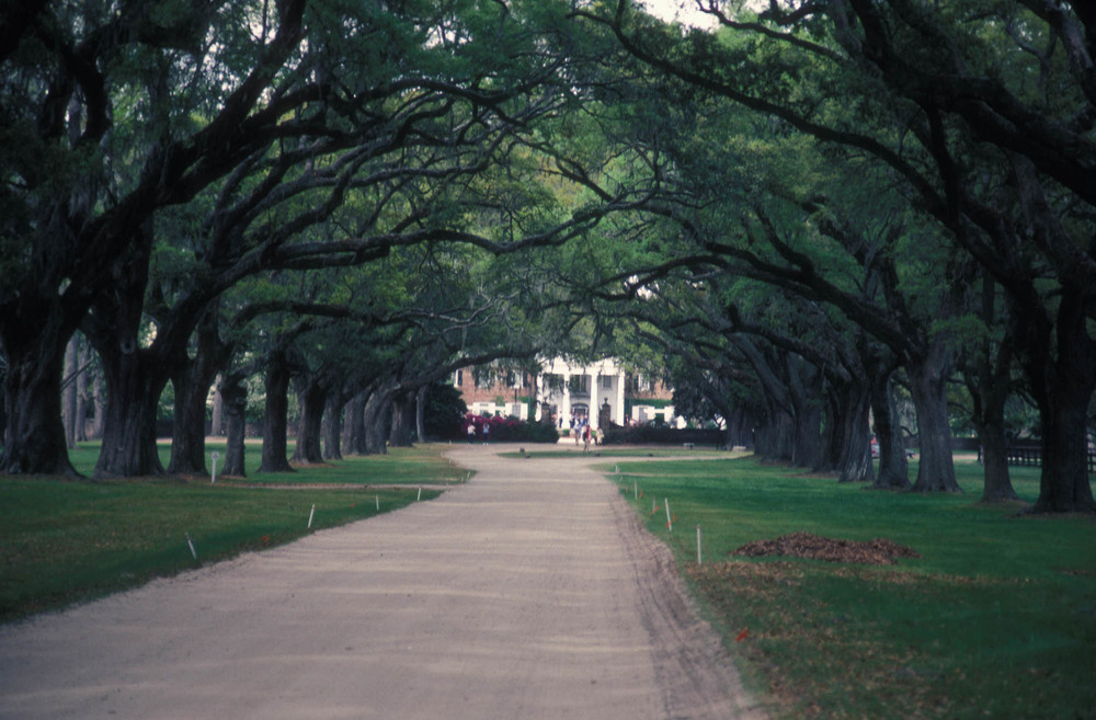 Charleston, SC Wedding Venue - Boone Hall Plantation