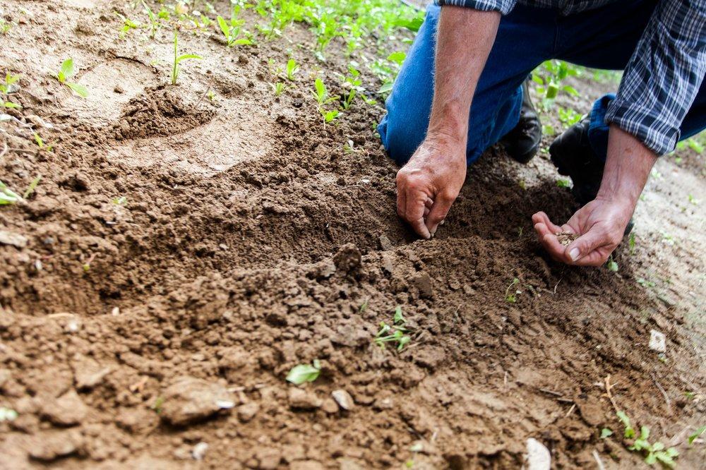 soil-2561136_1920.jpg