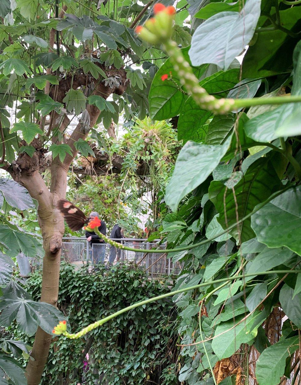 Cle Botanical Garden pic 20181223.jpg