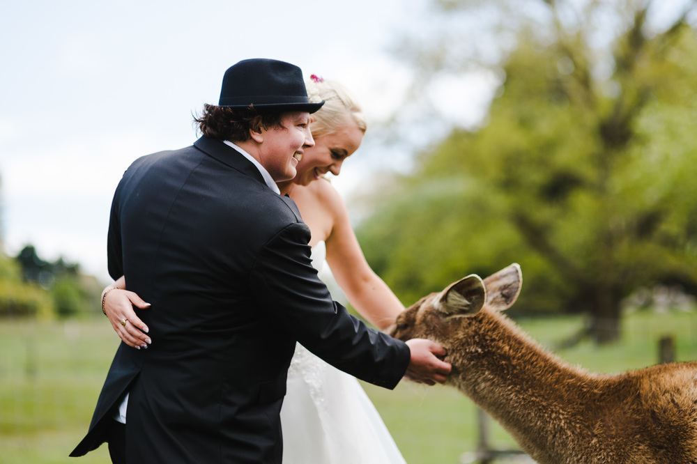 50 wedding couple patting deer new zealand.JPG