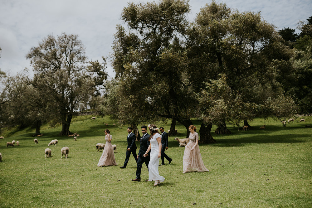 Bridal Party Photos Cornwall Park with Sheep
