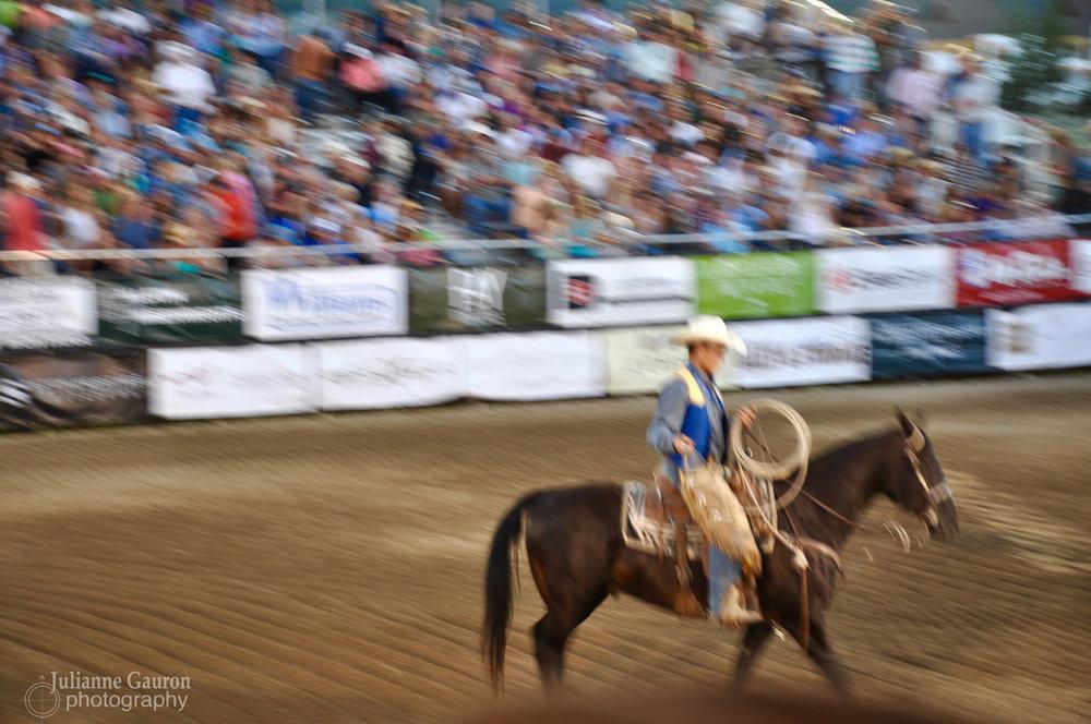 Montana rodeo Horse_JGauron.jpg