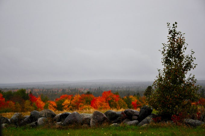 Driving through Downeast, Maine in misting rain while mid October colors burst into flames.