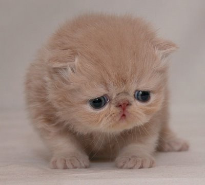 Sad cat is sad you unsubscribed.