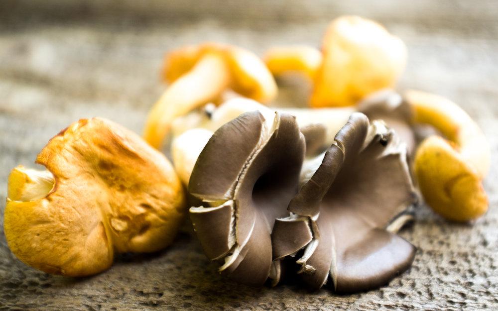 mushroom_glutenfreepasta.jpg