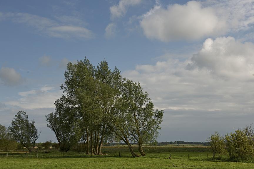 Snape Landscape