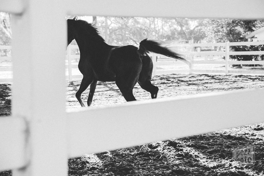 horse_TYCC_PezzPhoto