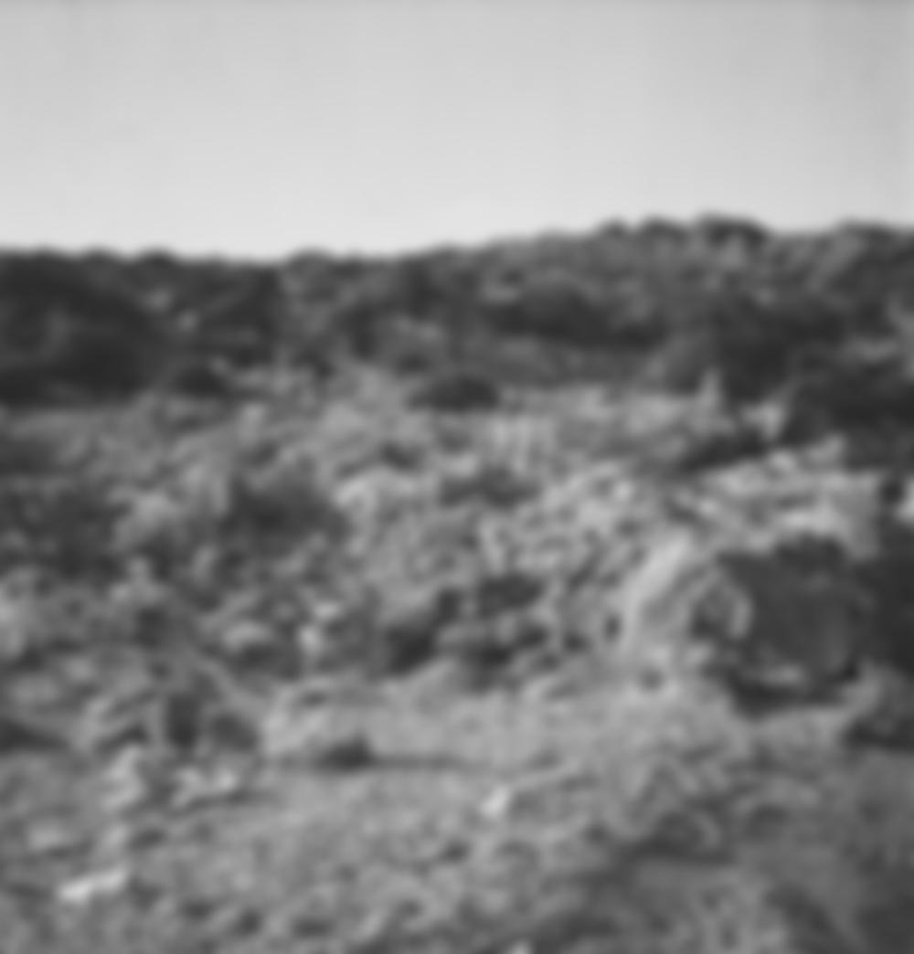 blurred98.jpg