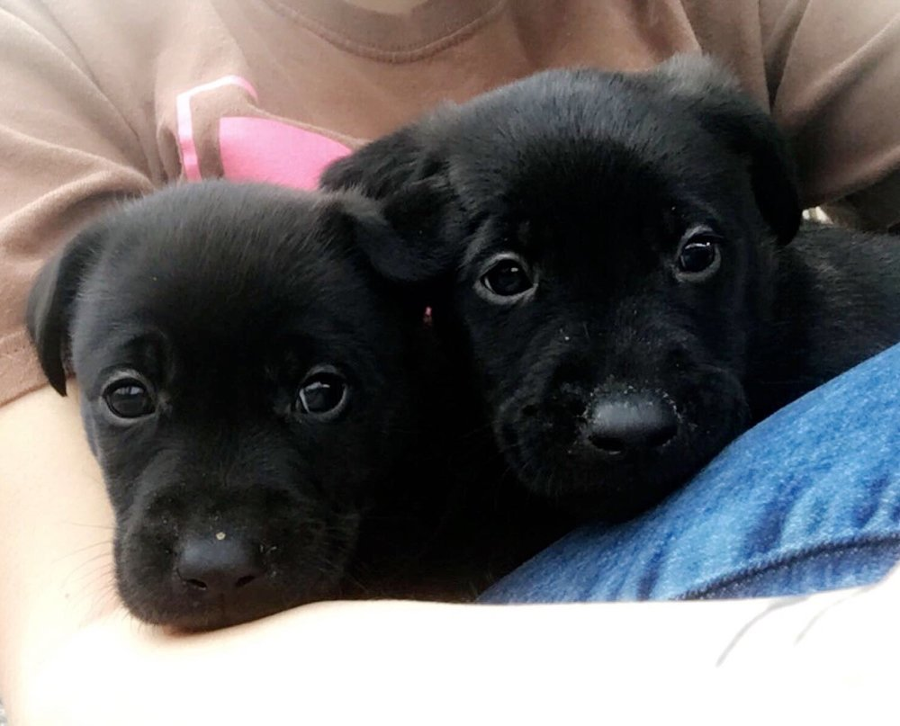 2 or 8 SPCA Puppies