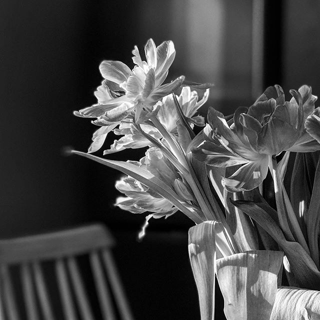 The light of spring #blackandwhite