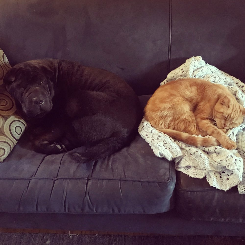 Bartleby and Murphy sharing a couch