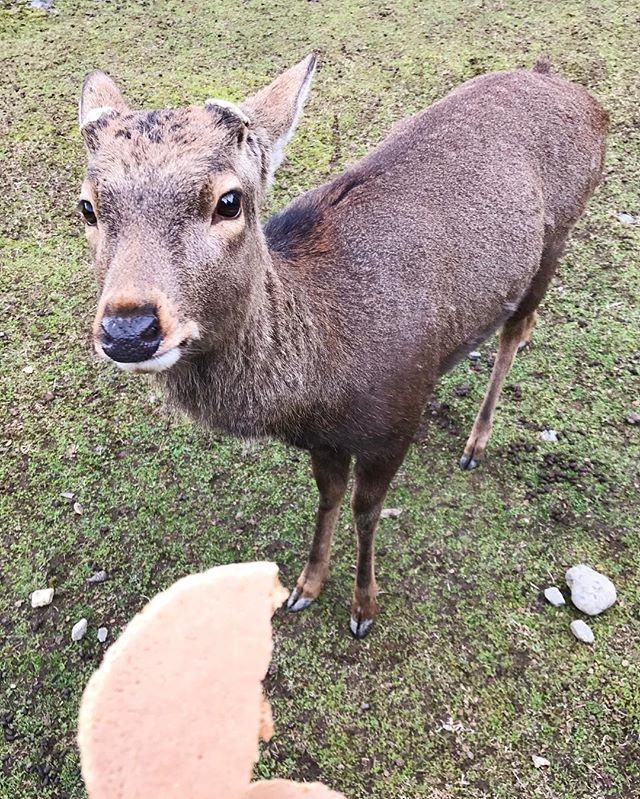 Feeding deer isn't as fun as feeding Neener #imissmydog #narapark
