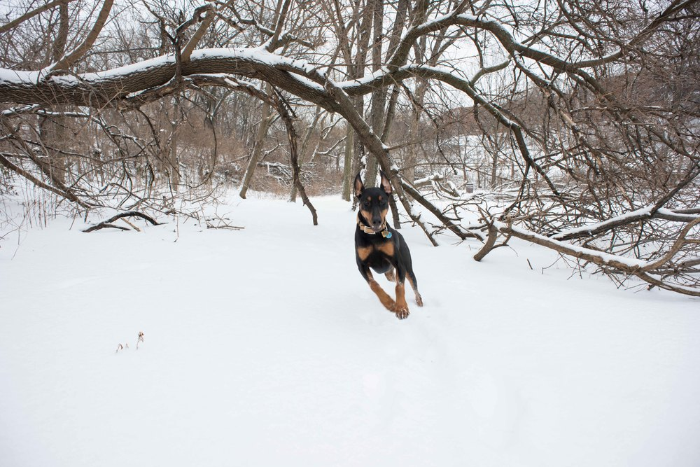 snow dog dc washington dc photographer