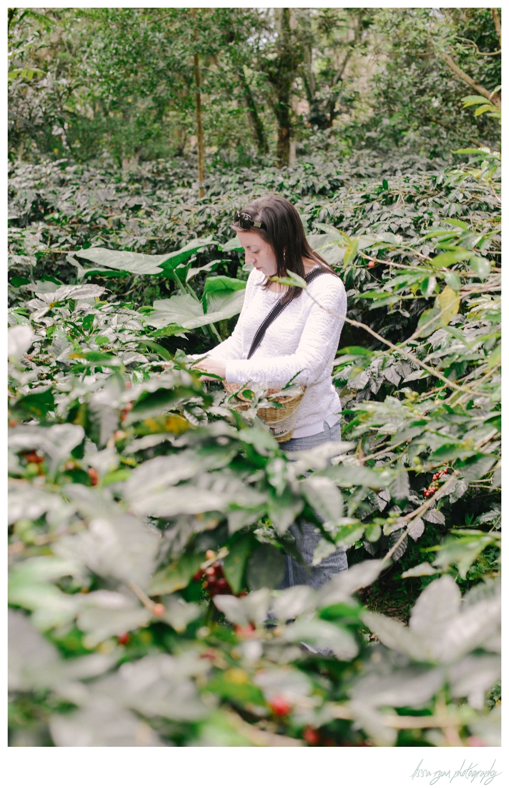 colombia coffee plantation coloma travel photography lissa ryan photography