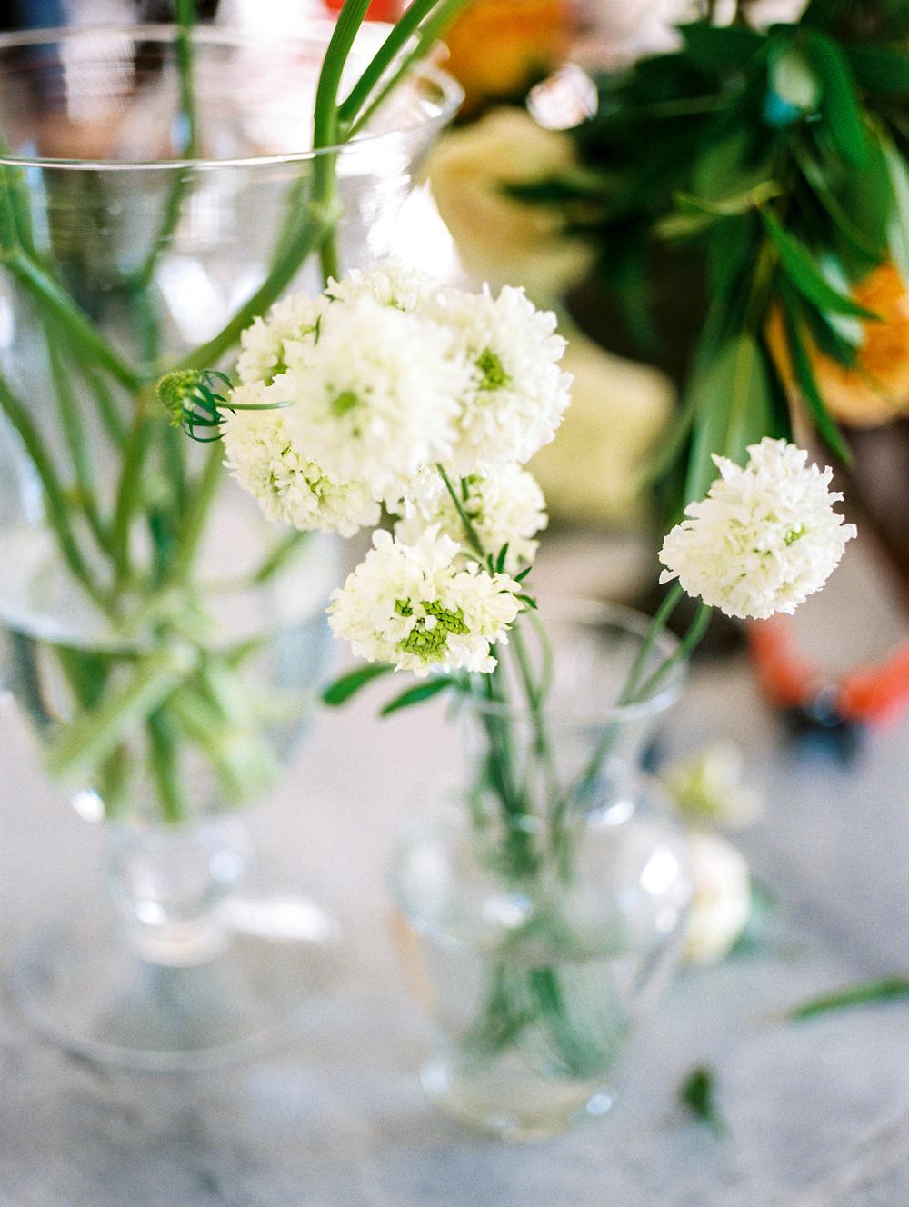 succulents & saffron dc florist local makers artisan fine art photographer lissa ryan photography