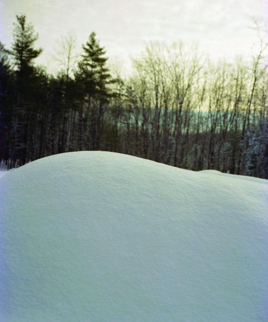 snow trees.jpeg