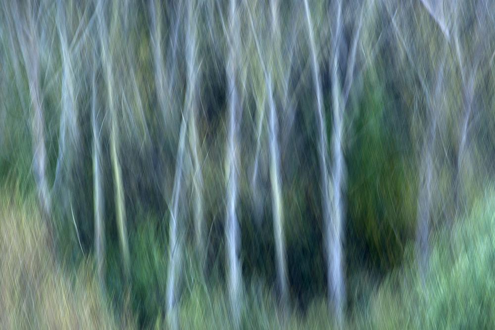 Woodlands (Impressionism).jpg