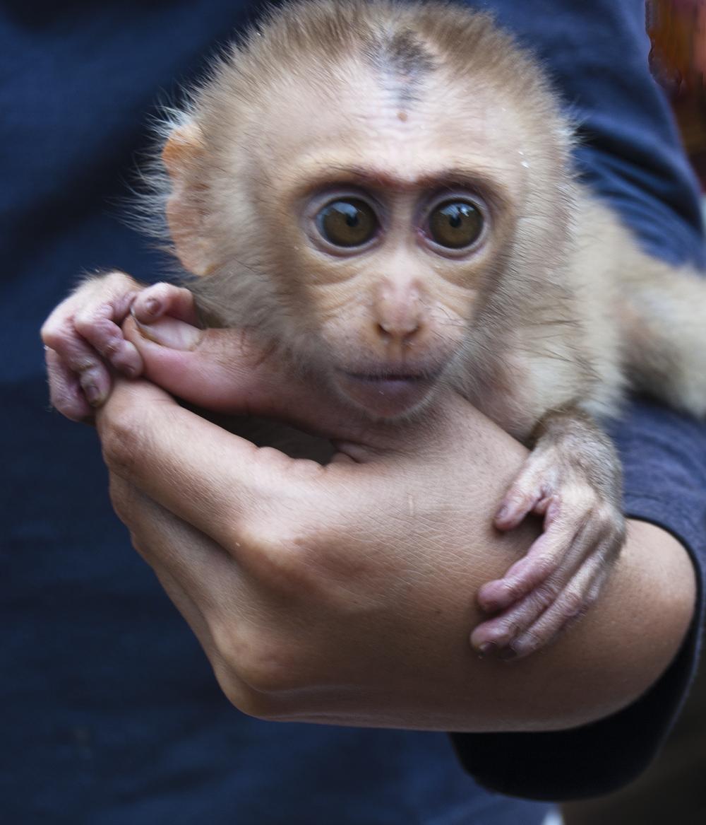 Orphan baby monkey