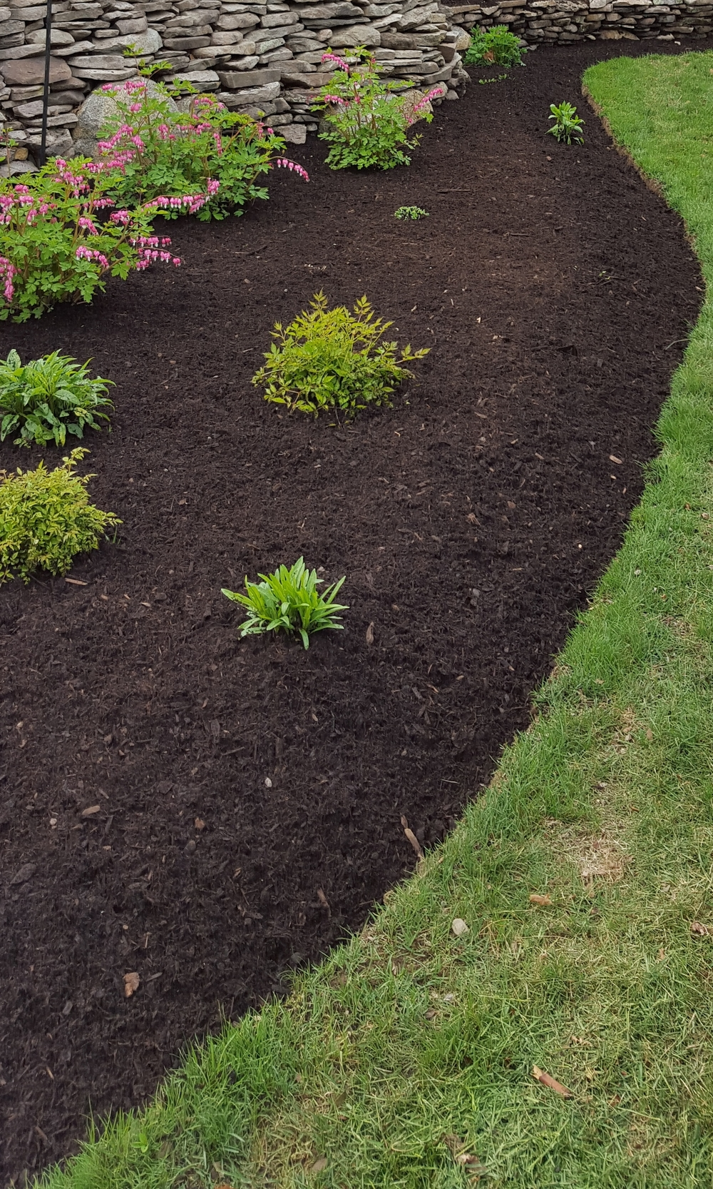 Early Spring Mulch