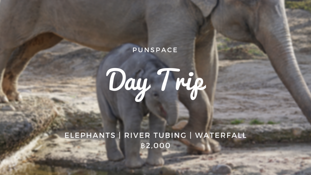 Punspace Day Trip - Elephants - Facebook.png