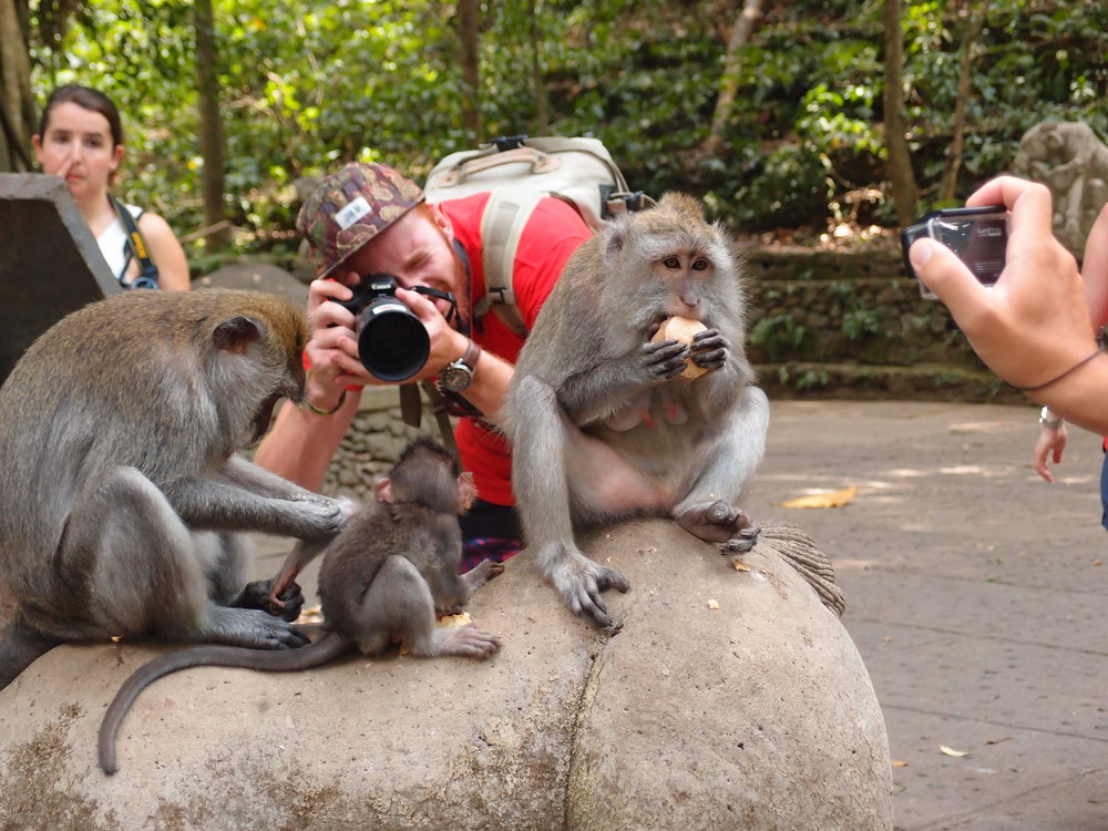 Bali, Ubud, Monkey Forest, Macaques (4).JPG