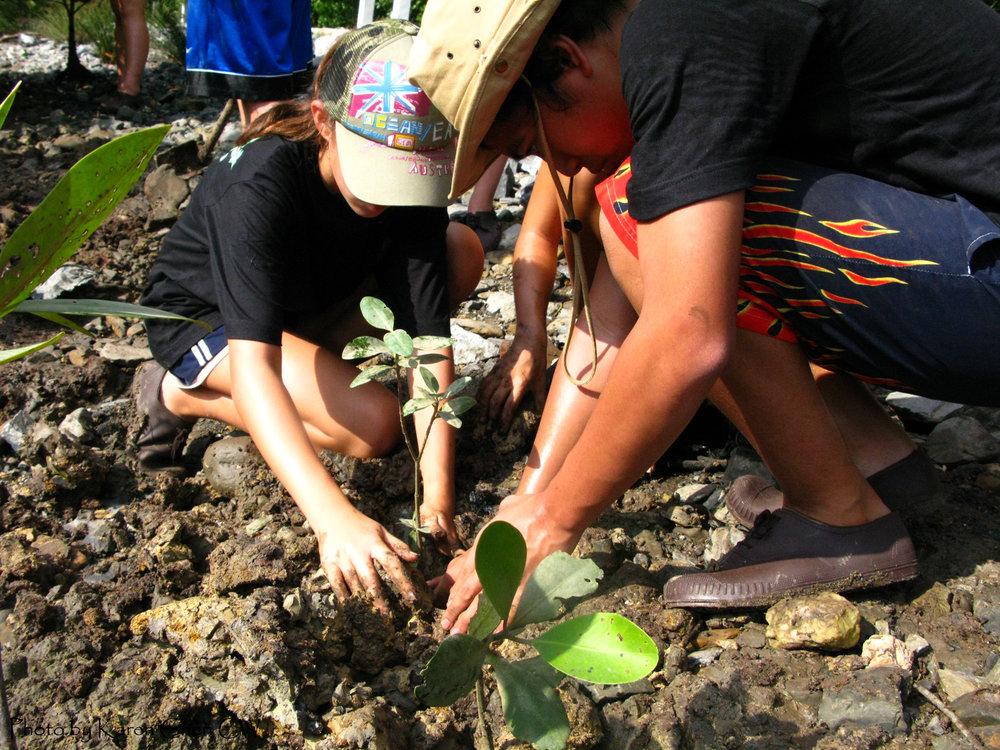 Langkawi, Mangroves, Mudflat Sapling Planting 2.JPG